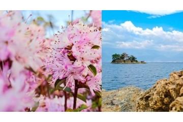 四季如春 · 春如四季——vivo S6记录云南人间四月天